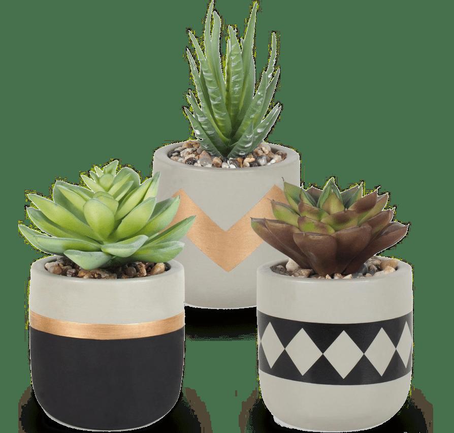 mooie kunstplanten - cadeau voor opa