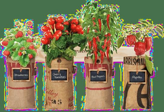 zelf groenten kweken - cadeau opa 70 jaar